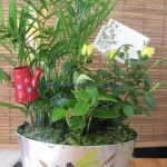 Live Plants $50 & up