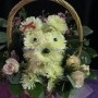 Puppy flowers $50+up